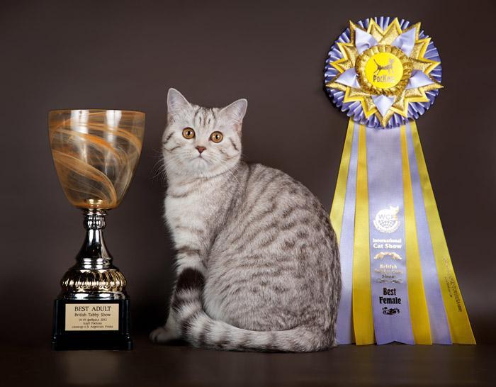 Поздравления для кошки собой