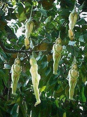 Фото цветов растения narilatha