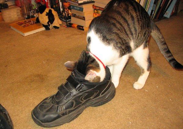 precious cat kitten attract litter