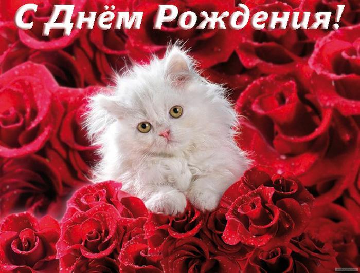 Фото открытка поздравление