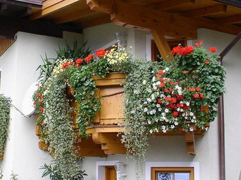 Что хорошо растет на балконе.