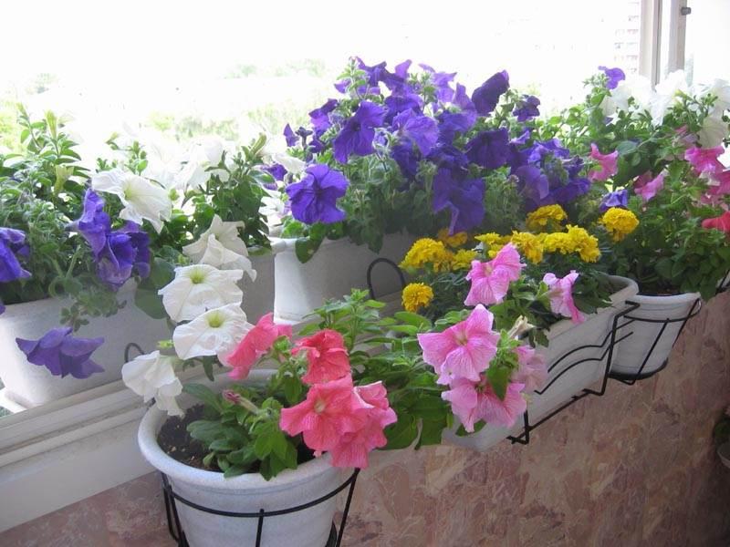 Какие цветы посадить на балконе - наш дом и дача - дом 2 све.