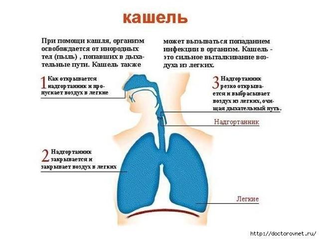 Лечение лающего кашля в домашних условиях