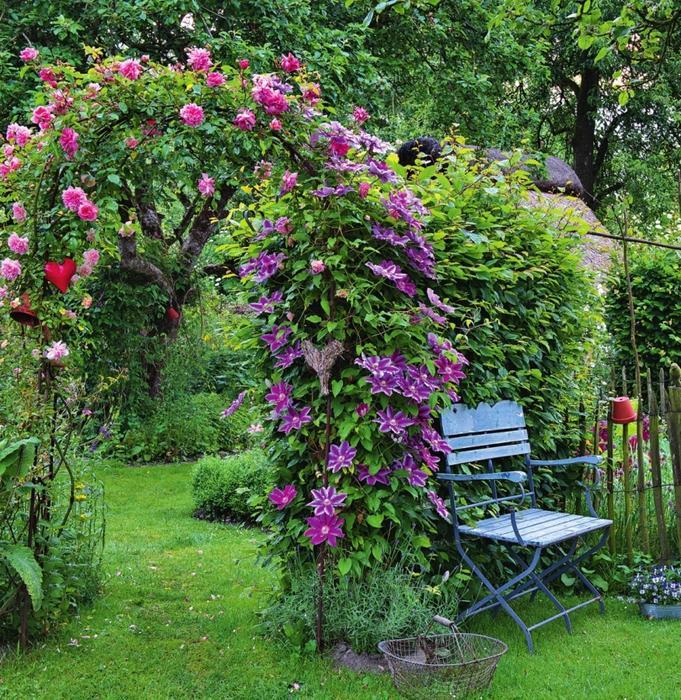Выращивание клематис в саду 210