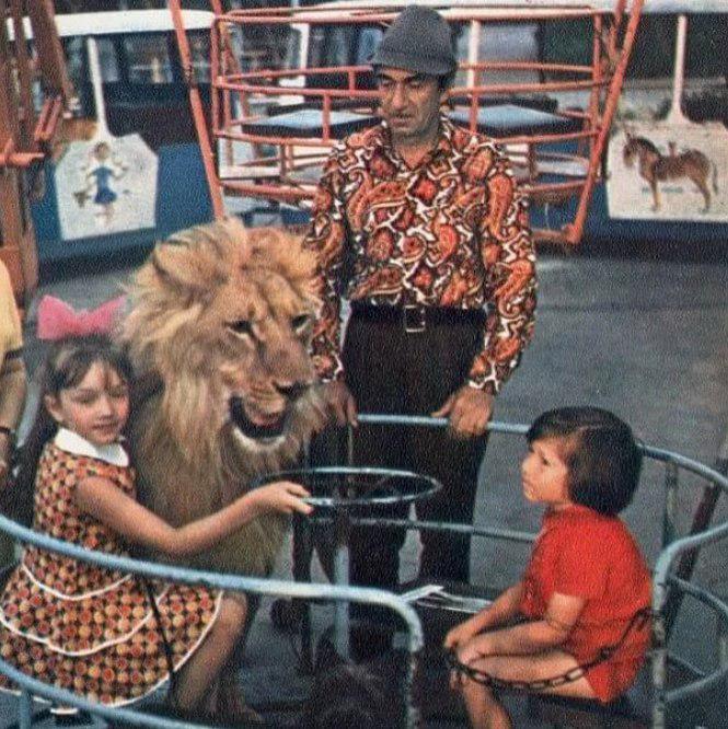 Картинки по запросу лев берберовыÑ