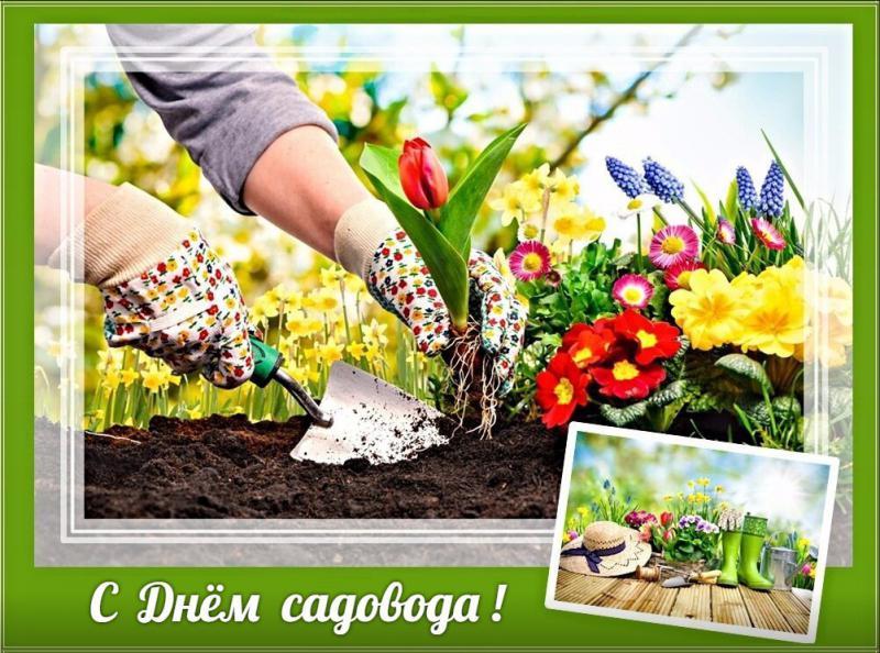 Солнечный, открытки с днем садовода и огородника